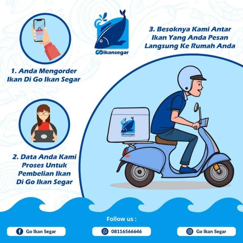 Ikan Segar Online